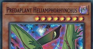Predaplant Heliamphorhynchus