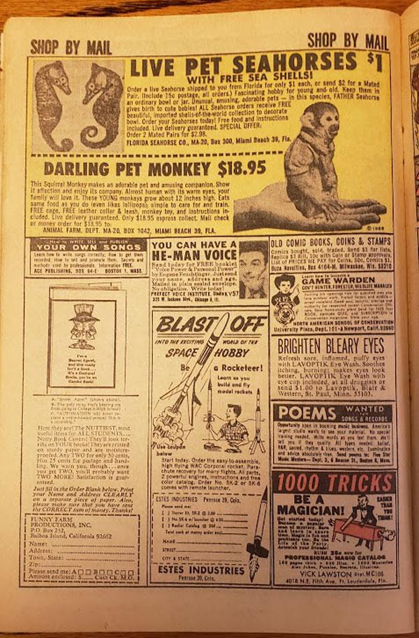 Buy a Darling Pet Monkey!