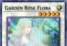 Garden Rose Flora