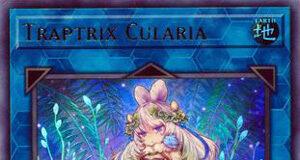 Traptrix Cularia